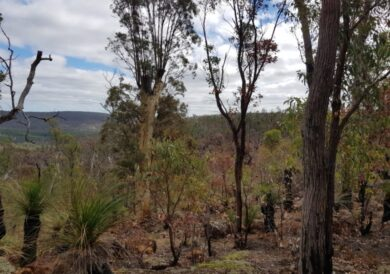 Bushwalking with Jennifer